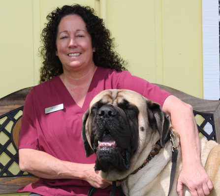 Lisa is our part time technician. She started here in 2001 and has been an integral part of our practice ever since. Lisa has 5 English Mastiffs, 2 jack russell terrorists, 35 chickens, 2 cockatiels 1 duck and many fish. She has been breeding Mastiffs for over 30 years. Thanks to her we have incorporated the raw diet into our practice. In her spare time she gardens, visits nurseries and is an avid gun collector. She has been married for 22 + years.